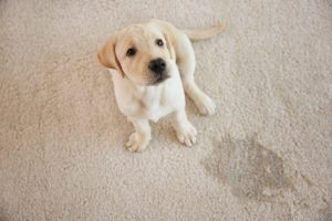 Professional Stain Removal Conroe TX